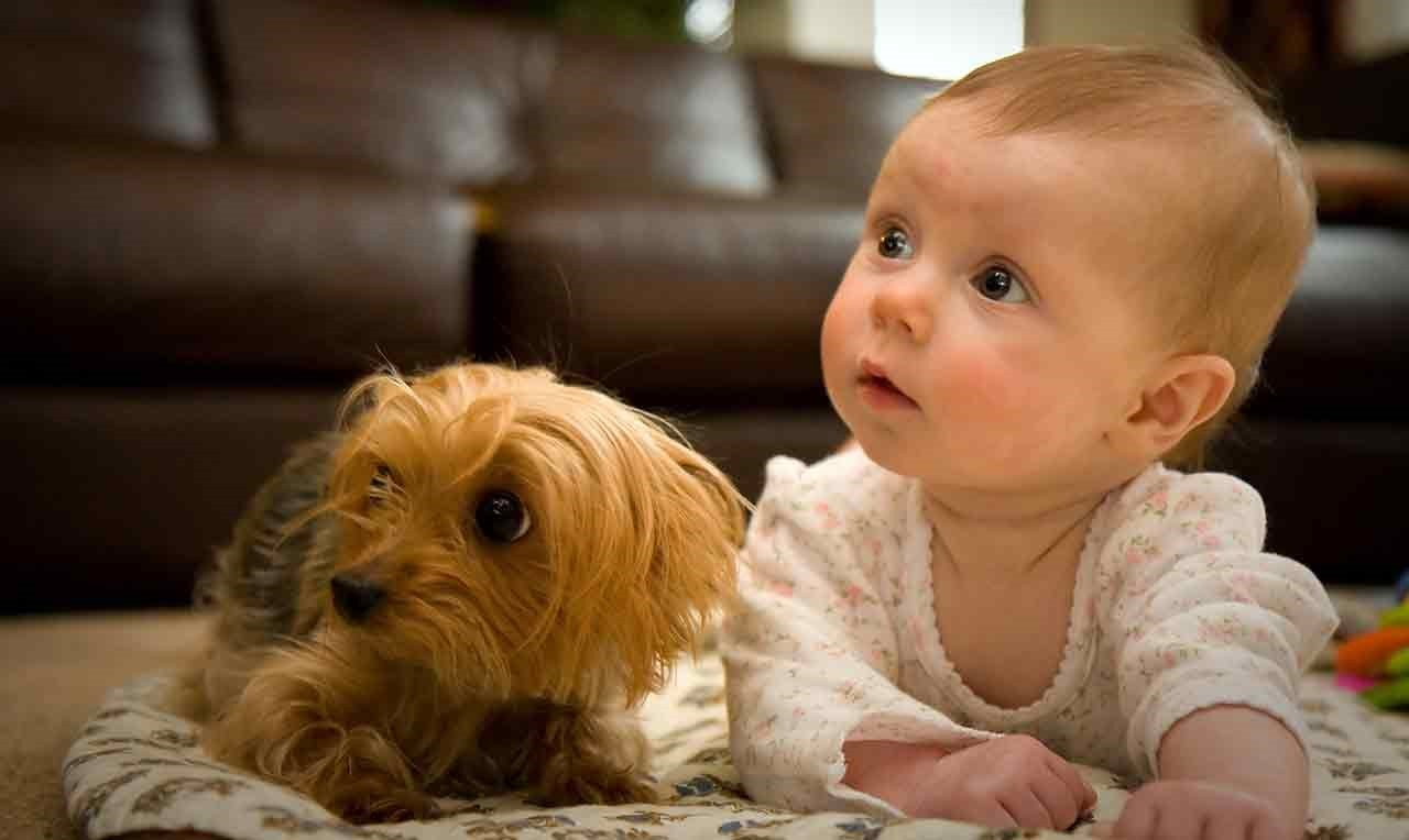 I benefici di avere un amico a quattro zampe per i bambini
